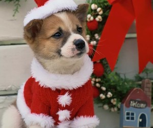 background, christmas, and dog image