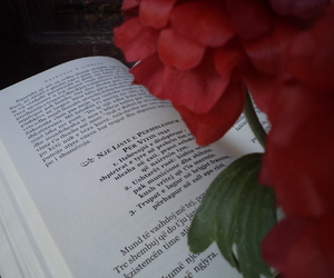alternative, book, and flower image