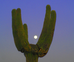cactus and blue image