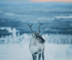 goals, outside, and reindeer image