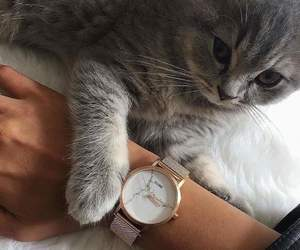 cat, kitten, and time image