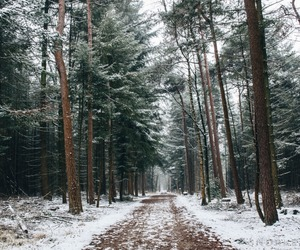 christmas, forest, and snow image