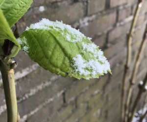 frozen, green, and plant image