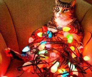 Gatos, luces, and navidad image