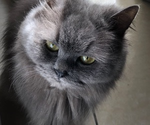 cat and grey image