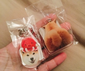 dogs, pet, and marutaro image