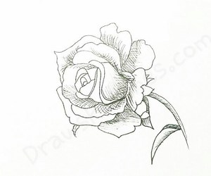 draw, pencil sketch, and rose drawing image