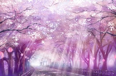 Cherry Blossoms Path Desktop Nexus Wallpapers