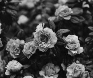 aesthetics and black image
