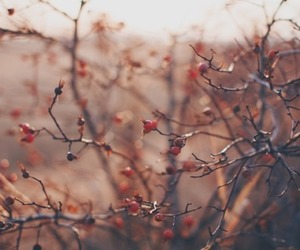 autumn, branch, and fall image