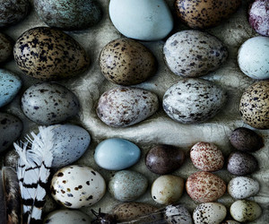 eggs and photography image