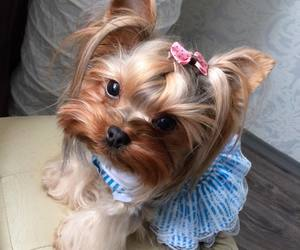 animals, baby, and cute dog image