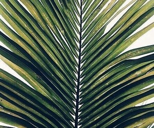 green, palms, and plants image