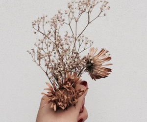 aesthetic, flowers, and brown image