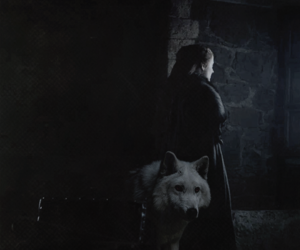 ghost, game of thrones, and sansa image