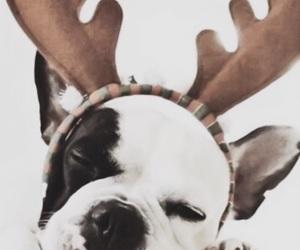 christmas, dog, and wallpaper image