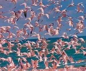 pink, bird, and flamingo image