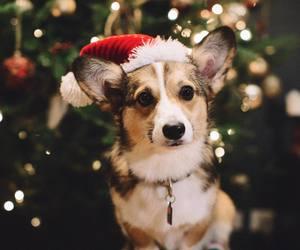 bokeh, xmas, and christmas image