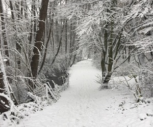 december, germany, and path image