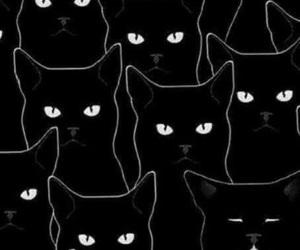 cat, wallpaper, and black image