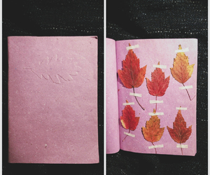 autumn, fall, and herbarium image