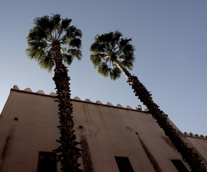 architecture, marrakech, and palm image