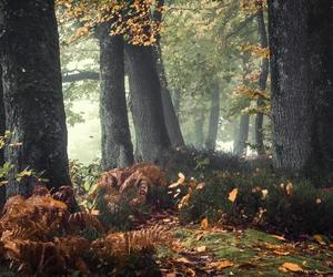 autumn and magical and mystical image