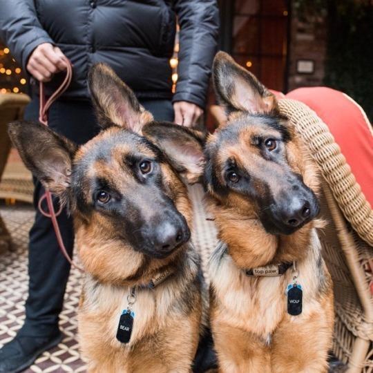 animal and dog image