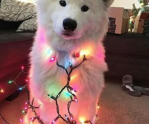 animals, christmas, and dog image