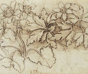 art, drawings, and flowers image