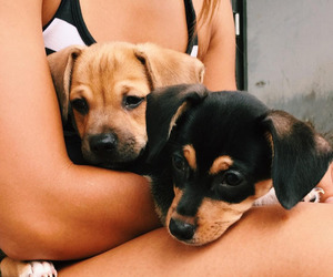 animals, pets, and cute image