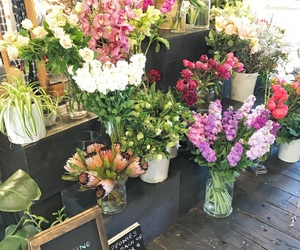 auckland, flowers, and flower stand image