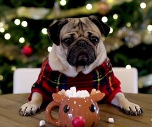 christmas, aesthetic, and dog image