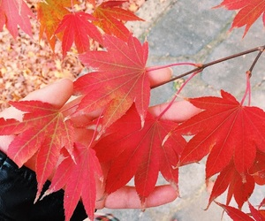 autumn, christmas, and red colour image