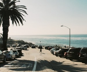 aesthetic, ocean, and palm trees image