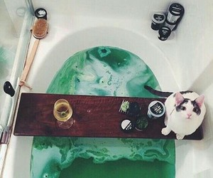 cat, bath, and green image