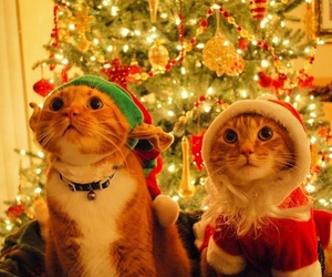 cats, new year, and christmas image