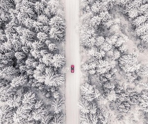 car, forest, and wood image