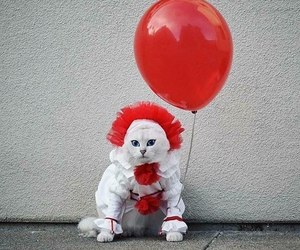 cat, it, and red image