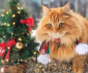 cats, cute, and december image