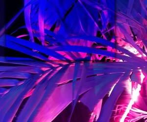 plants, neon, and pink image