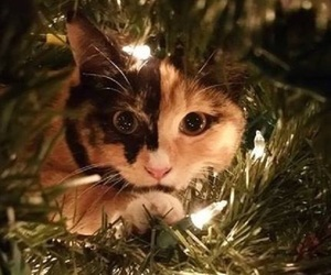 christmas tree, kitten, and lights image