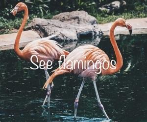 animal, experience, and flamingos image