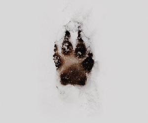 snow, paws, and wolf image
