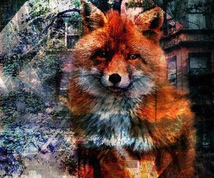 animal, fox, and animals image