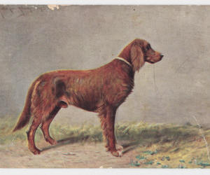 breed, dog, and vintage postcards image