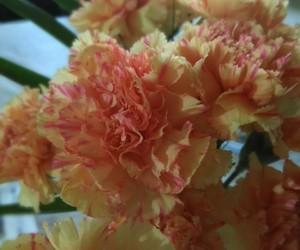 amarillo, aniversario, and flor image