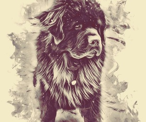 dog and newfoundland image