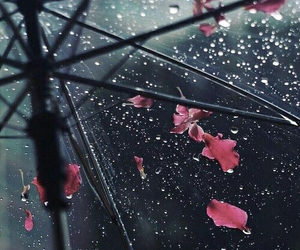rain, flowers, and umbrella image