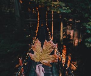 autumn, seasons, and clothing image